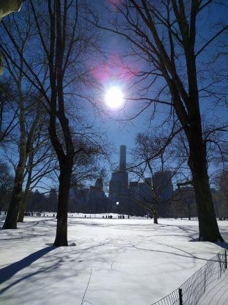 Sunlight in Central Park