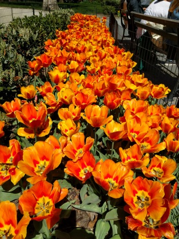 Earth Day Tulips in Madison Square Park